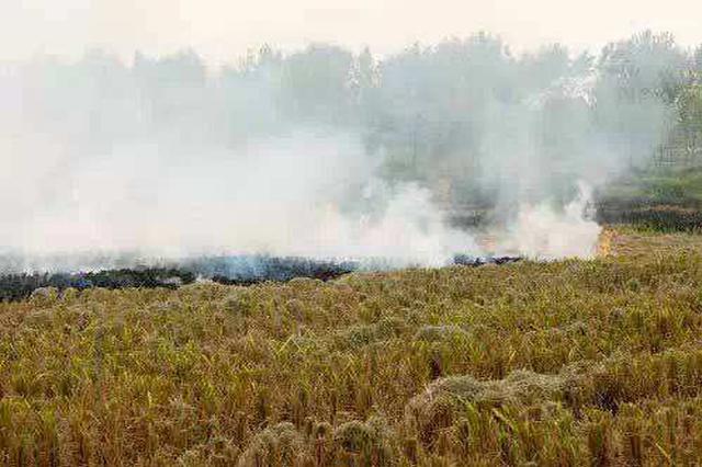 顺平一男子在田间焚烧杂物 造成环境污染被拘留