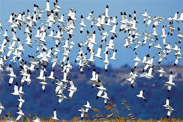 河北:保护候鸟不到位 相关人员将被追责