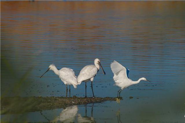"""河北这个地方入选""""最值得关注的十块滨海湿地"""""""