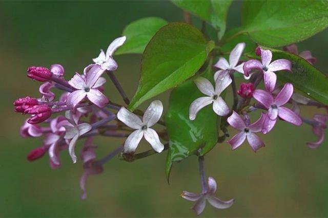 石家庄春季赏花指南来了 一直看到4月底