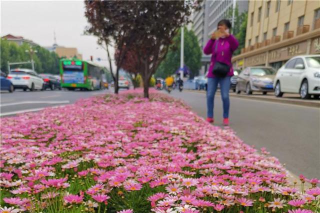 石家庄5条路要种40种花 五彩花田就在家门口