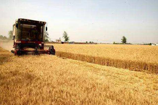 11日夜间到13日河北多地有雷雨 抓紧收麦子