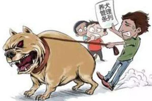 河北:遛狗不拴狗绳将被罚款