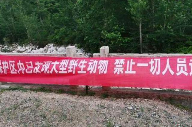 青龙疑似野生华北豹咬死牛羊 居民游客被禁上山