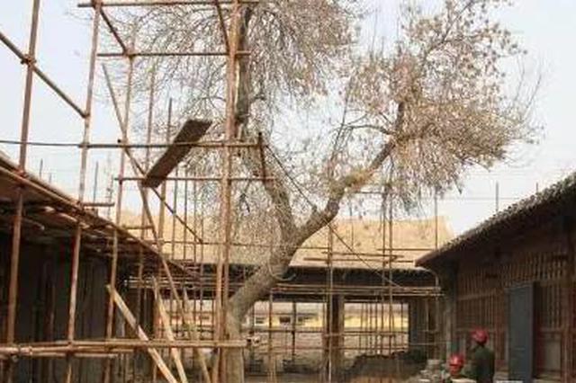 深州:建于清代的粮仓盈亿义仓完成整体修缮
