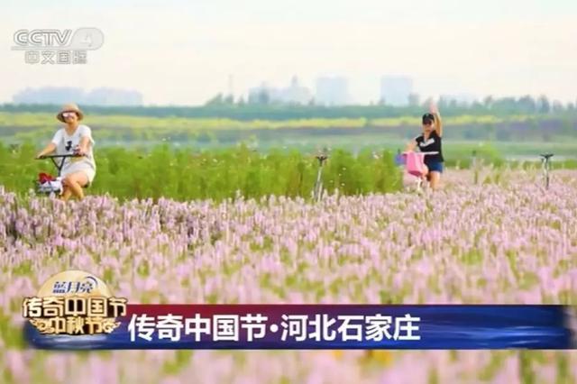 中秋节石家庄这个地方上央视了 美翻了!