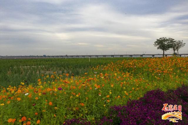 美景如画:石家庄这条大河入选全省十大秀美河湖