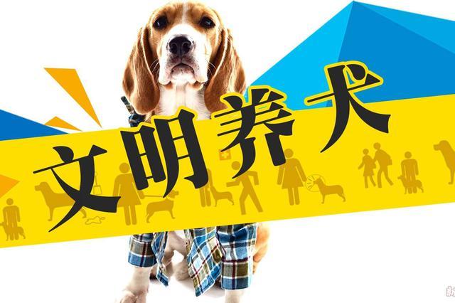 石家庄加强养犬管理:遛犬不牵绳等行为一律顶格处理