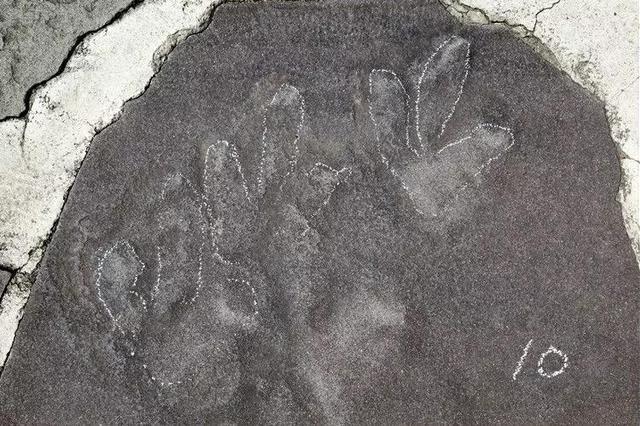 河北承德避暑山庄发现大量侏罗纪恐龙足迹