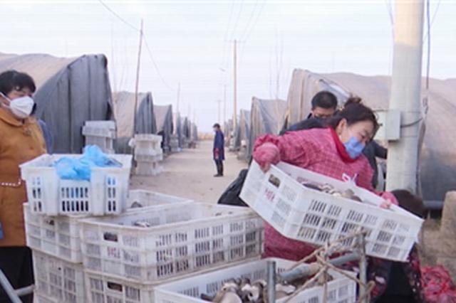 """广平:防疫生产两不误 菌菇撑起""""经济伞"""""""
