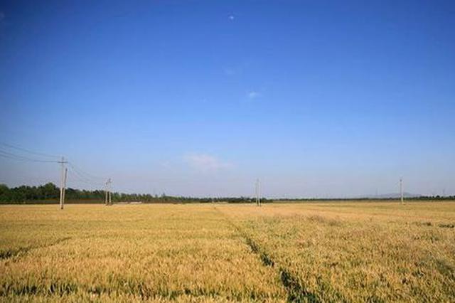 河北省中南部小麦返青期比常年提前8至10天