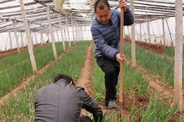 沧县:防疫之时紧备耕 不误农时不负春