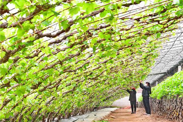2月底前河北省涉农企业全面恢复生产