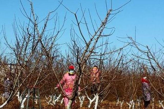 灵寿县有序推进农业复耕生产