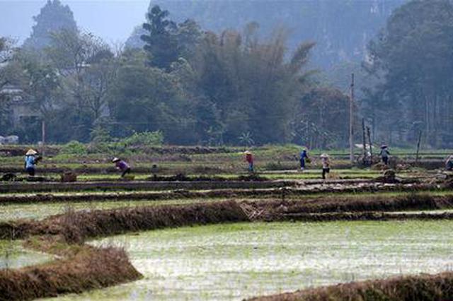 河北春耕备耕生产:种植标准化 农业质量高