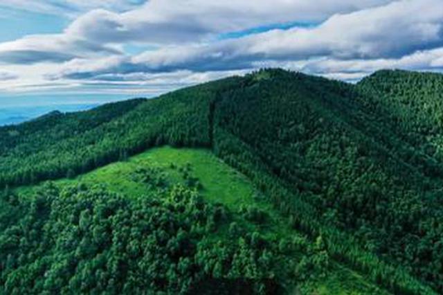 河北持续推进国土绿化 今年已完成营造林604.9万亩