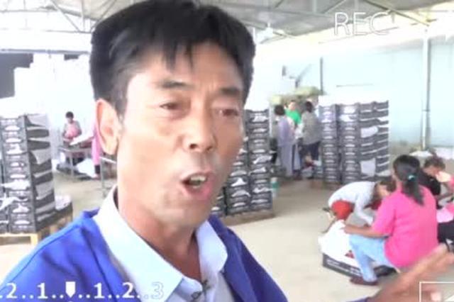 """【小康看老乡VLOG】老牛的""""桃""""金致富经"""