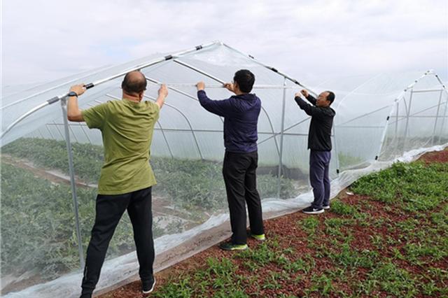 【决胜2020:我们村里最熟悉的陌生人】 西瓜大棚促就业增收