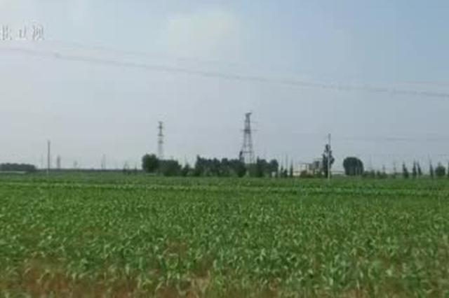 【走向我们的小康生活】沧州吴桥:农业现代新技术 农民走上小