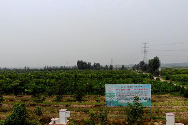 石家庄鹿泉区黄壁庄镇:中药材种植开辟致富路 助农增收奔小康