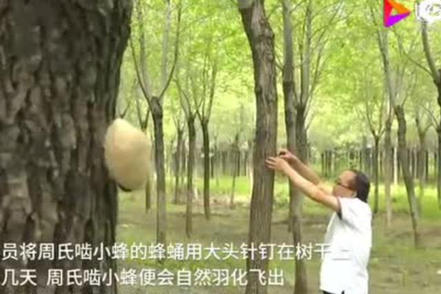 """河北石家庄:请来""""虫医生""""保护生态资源"""