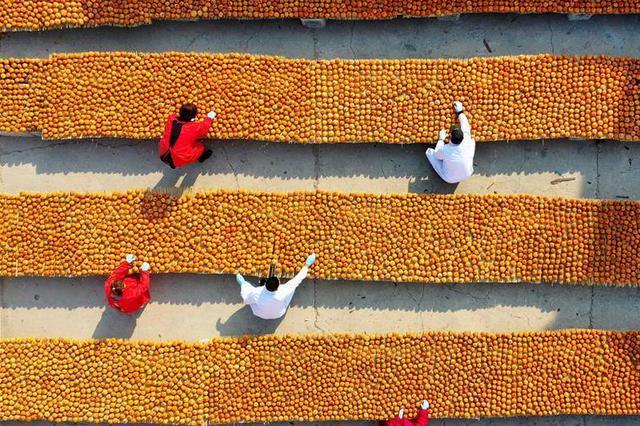 河北遵化:手工柿饼保增收
