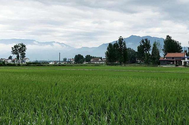 自然资源部通报农村乱占耕地建房典型案例:一些省份问题突出