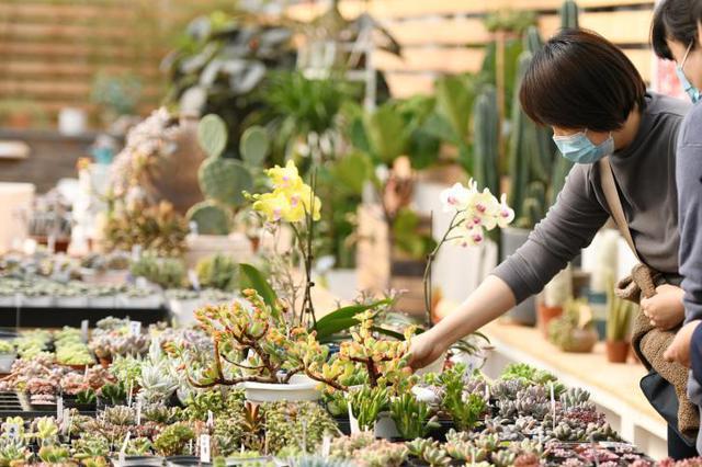 河北石家庄:春节将至花卉俏销