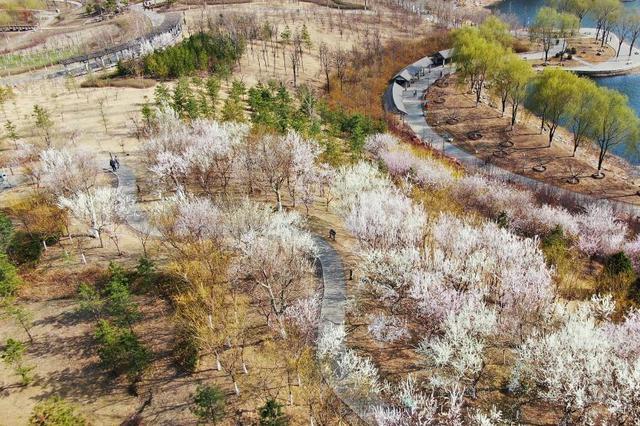 河北迁安:花开滦河畔 春色引游人