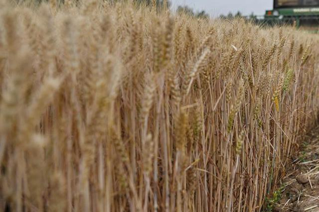 """唐山发布""""耕地种树""""初查情况:造成麦田毁损4.01亩"""