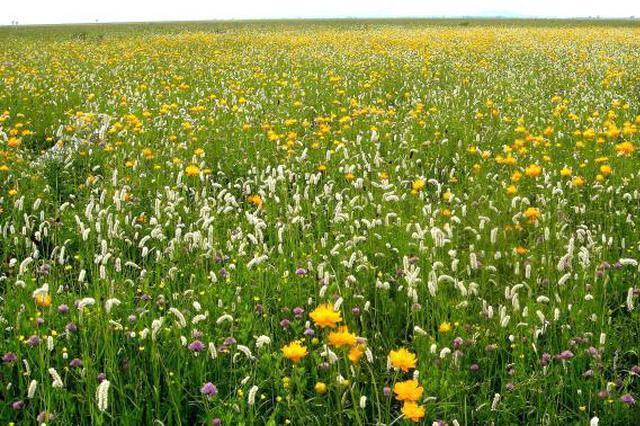 河北推进草原生态保护修复治理:2025年草原综合植被盖度达73