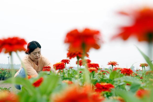 特色花卉富农家