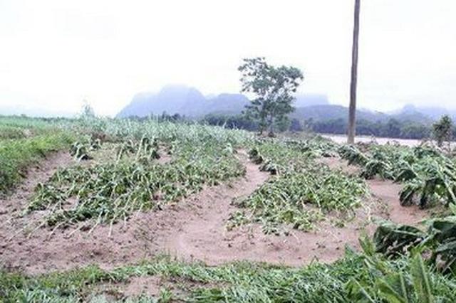 农业农村部派出专家组赴河南河北指导灾后农业生产恢复