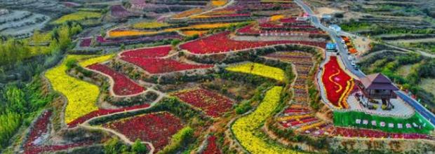 河北推出48条春观花系列休闲农业与乡村旅游线路
