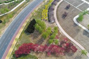 蜿蜒的小路和多彩的绿植形成美丽的画面。