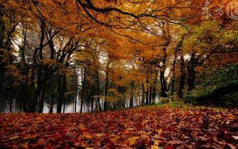 秋季为你量身定制一套养生秘籍