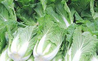 冬储蔬菜要够城区居民吃5-7天