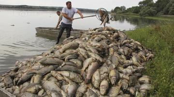 捷克极端高温 几十吨死鱼浮水面