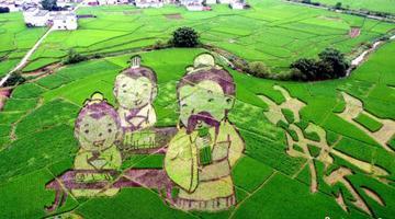大型稻田艺术景观带