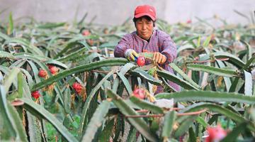 平山:农业园区助力脱贫致富