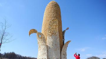 """吉林舒兰现10米高""""超级大玉米"""""""