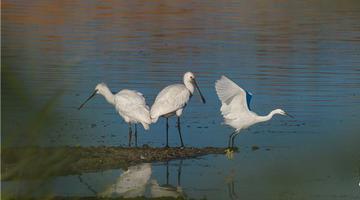 石河南岛湿地