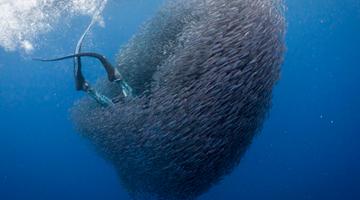 潜水员巧遇鱼群旋涡被瞬间吞没