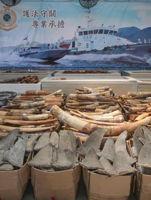 香港查获大量濒危物种制品