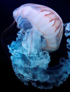 """感受来自海洋的""""浪漫"""""""