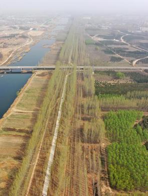 雄安新區造林面積已達41萬畝