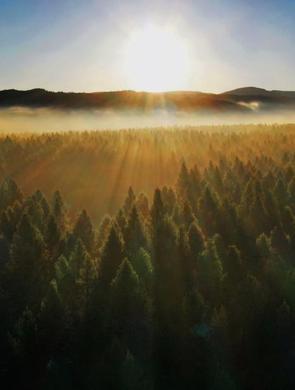 塞罕坝林海晨景