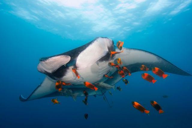 摄影师用镜头定格海底生物奇妙瞬间