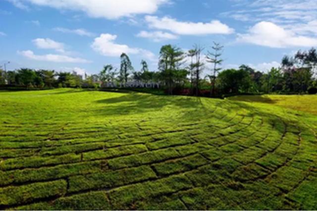 衡水秋冬造林绿化12.29万亩 主干街道绿化率达100%