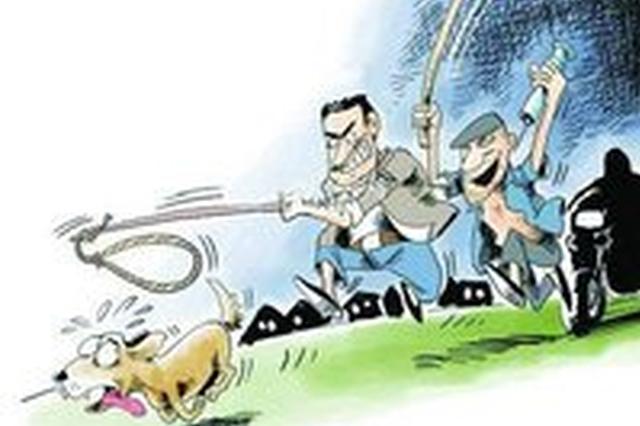 唐山三个贼专偷宠物狗 一年作案百余起